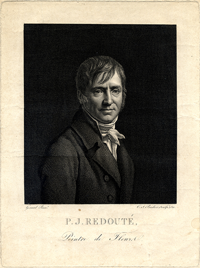 <p>Pierre-Joseph Redouté (1759–1840), engraving by Charles-Simon Pradier (1783–1847), 1811, after an original by François Pascal Simon, Baron Gérard (1770–1837) for Redouté and Claude-Antoine Thory (1759–1827), <em>Les Roses</em> (Paris, Didot, 1817–1824, 1: frontispiece), HI Archives portrait no. 3 and HI Library call no. DT100 134 R319R.</p>