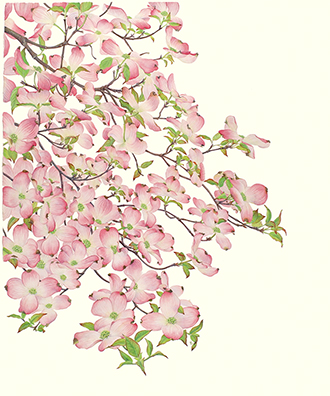 <p>The Sutton Dogwood, gouache on paper by Katie Lee (1942–), 2001, 75.9 × 56.9 cm, Alisa and Isaac M. Sutton Collection, reproduced by permission of the artist and the owner.</p>