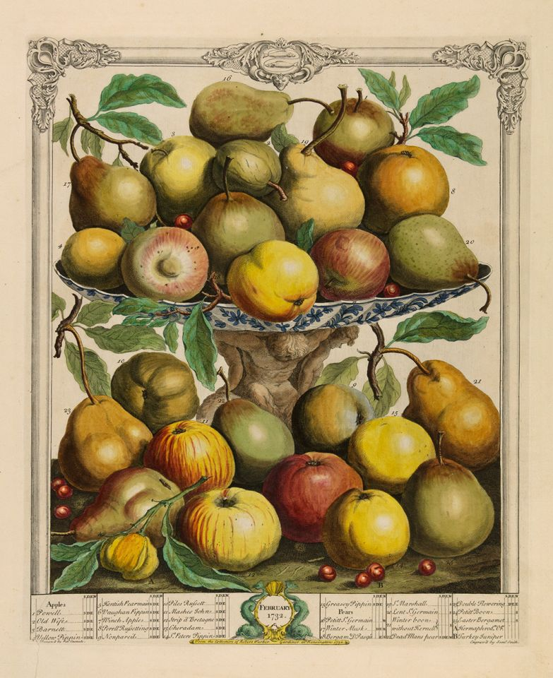 <p><em>February</em>, hand-colored engraving by James Smith (fl.1732) after an original by Pieter Casteels (1684–1749) for Robert Furber (ca.1674–ca.1756), <em>The Twelve Months of Fruits</em> (London, 1732), HI Art accession no. 0212.</p>