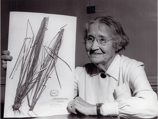 <p>Mary Agnes Chase (1869–1963), holding a specimen of <em>Paspalum splendens</em> Hackel, Poaceae alt. Gramineae, in the United States National Herbarium, Washington, D.C., 30 April 1956, 18 × 23 cm, photograph by the <em>Washington Post</em>, HI Archives portrait no. 1, courtesy of the <em>Washington Post</em>.</p>