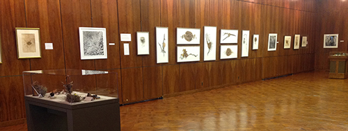 <p><em>Elements</em> exhibition hanging in the gallery, Hunt Institute for Botanical Documentation, 18 March 2015, photograph by Lugene B. Bruno, reproduced by permission of the photographer.</p>