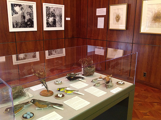 <p>Selection of birds, nests and eggs on loan from the Carnegie Museum of Natural History for the <em>Elements</em> exhibition, Hunt Institute for Botanical Documentation, 18 March 2015, photograph by Lugene B. Bruno, reproduced by permission of the photographer.</p>