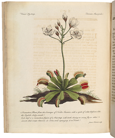"<p>Venus's Fly trap, Dionaea muscipula [<em>Dionaea muscipula</em> Ellis, Droseraceae], hand-colored engraving by James Roberts after an original by an unknown artist for John Ellis, ""A botanical description of the Dionaea muscipula"" in <em>Directions for Bringing over Seeds and Plants</em> (London, printed and sold by L. Davis, 1770, pl. opp. p. 37), HI Library call no. MC1 E47D.</p>"