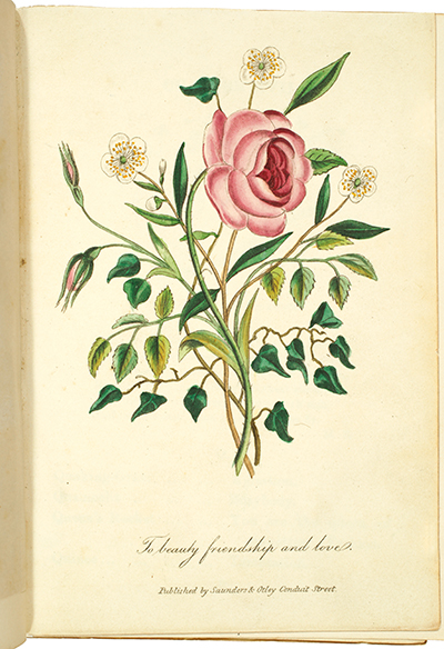 <p>To beauty, friendship and love [<em>Rosa</em> Linnaeus, Rosaceae; <em>Hedera</em> Linnaeus, Araliaceae; <em>Myrtus</em> Linnaeus, Myrtaceae], hand-colored engraving published by Saunders and Otley, Conduit Street, after an original by an unknown artist for Anna Christian Burke, <em>The Illustrated Language of Flowers</em> (London, G. Routledge and Co., 1856), HI Library call no. DG21 B959I.</p>