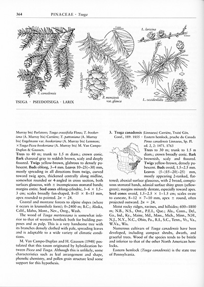 <p><em>Tsuga canadensis</em> (Linnaeus) Carrière, Pinaceae, page showing the entry for Eastern hemlock, the state tree of Pennsylvania, for <em>Flora of North America</em> (1993, vol. 2, p. 364). Reproduced with permission of the Flora of North America Association.</p>