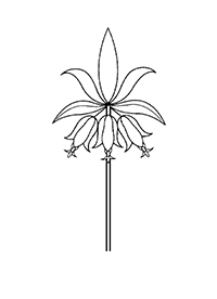 <p><em>Fritillaria imperialis</em> Linnaeus, Liliaceae, crown imperial, was one of Rachel Hunt's favorite garden flowers and was a logical choice for the Hunt Institute's logo. This stylized rendition was adopted in 1970.</p>