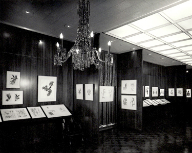 <p><em>Contemporary Botanical Art & Illustration</em> exhibition, which became known as the 1st International, hanging in the conference room, Hunt Botanical Library, between 6 April and 1 September 1964, photograph by unknown photographer.</p>