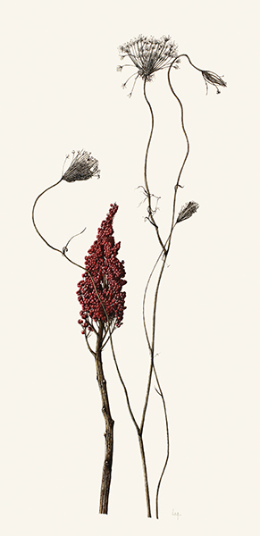 <p>Winter collection, Winged sumac and Queen Anne's lace (Rhus copallinum, Daucus carota) [<em>Schmaltzia copallinum</em> (Linnaeus) Small, Anacardiaceae; <em>Daucus carota</em> Linnaeus, Apiaceae alt. Umbelliferae], watercolor on paper by Lara Call Gastinger (1976–), 2012, 58 × 30 cm, HI Art accession no. 7949, reproduced by permission of the artist.</p>