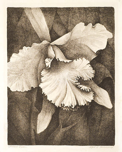 <p>British Queen [× <em>Laeliocattleya</em> Shaw, Orchidaceae], lithograph on paper by Ralph Griswold (1894–1981), ca.1931, 19.5 × 15.5 cm (<em>image</em>), 28.5 × 25 cm (<em>paper</em>), HI Art accession no. 0129, reproduced by permission of the estate of Roger Descombes.</p>