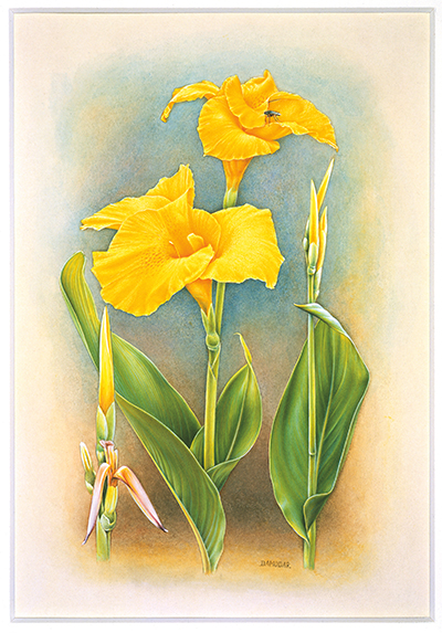 <p>Cannas with fly [<em>Canna</em> Linnaeus, Cannaceae], watercolor and tempera on paper by Damodar Lal Gurjar (1958–), 1996, 22 × 17.5 cm, HI Art accession no. 7134, reproduced by permission of the artist.</p>