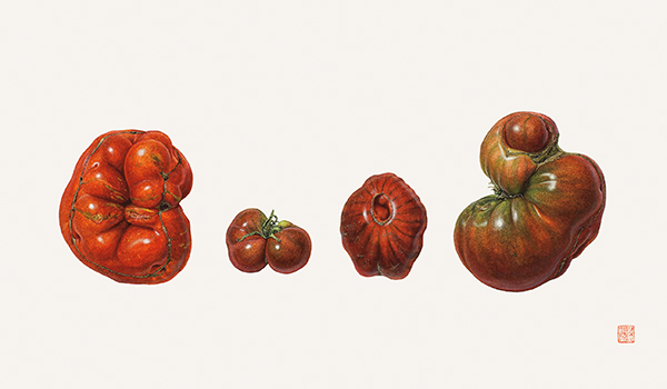 <p>Heirloom Tomatoes, Solanum lycopersicum [<em>Solanum lycopersicum</em> Linnaeus, Solanaceae], watercolor on paper by Asuka Hishiki (1949–), 2011, 37 × 55.5 cm, HI Art accession no. 8034, reproduced by permission of the artist.</p>