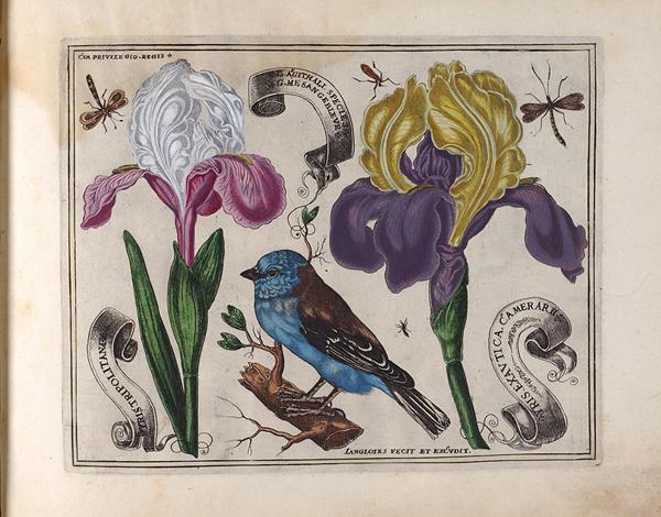 L Anglois Livre 1620 Hunt Institute For Botanical