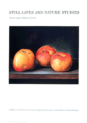 "<p>Apples, a full-color reproduction of an oil on artist's board by P. Dieffenbach (fl.1800s), 1862, 20 × 28"".</p>"