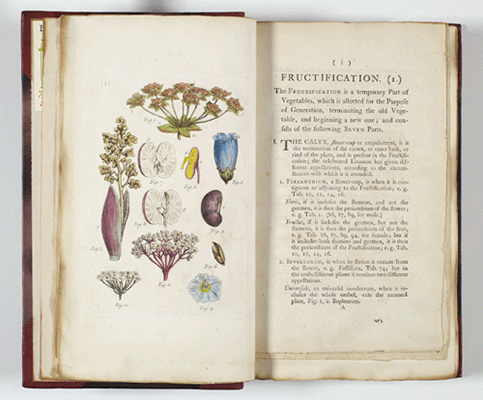 <p>Fructification, hand-colored engraving by John Miller (also Johann Sebastian Müller, 1715–1790) after his original for his <em>An Illustration of the Sexual System of Linnaeus</em> (London, Printed for Robert Faulder, 1794, vol. 1, pl. 1), Strandell Collection of Linnaeana no. 6702, HI Library.</p>