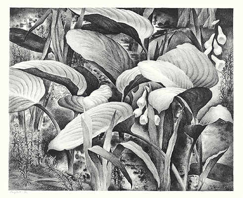 <p>Tangle 4 [<em>Galanthus</em> Linnaeus, Amaryllidaceae and <em>Hosta</em> Trattinnick, Liliaceae], lithograph on paper by Wilfred Readio (1895–1961), ca.1930–ca.1940s, edition 6/12, 30 × 37 cm (image), 38 × 46 cm (paper), HI Art accession no. 2062.</p>