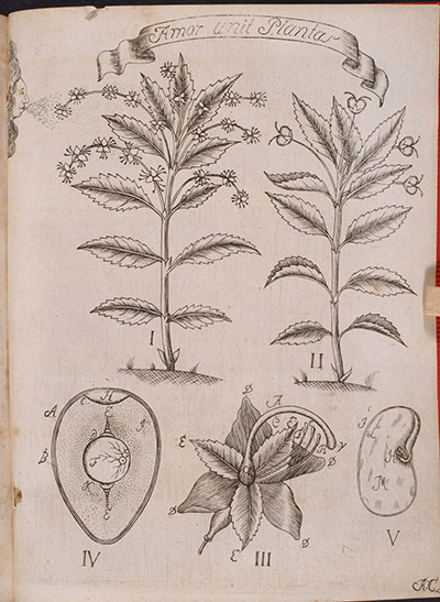 <p>Amor unit Plantas, engraving by an unknown engraver after an original by an unknown artist for Johan Gustaf Wahlbom (1724–1808), <em>Sponsalia Plantarum</em> (Uppsala, 1746), Linnaean Dissertations, Lidén no. 12, Strandell Collection of Linnaeana, HI Library. This dissertation was a commentary on chapter five of Linnaeus' <em>Fundamenta Botanica</em> (1736), defending his views on the sexuality of plants.</p>